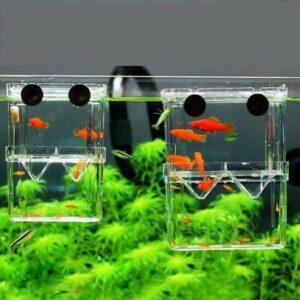 Caja de criador de aislamiento de peces acrílicos Tanque de acuario Incubadora para incubar Suministros para mascotas